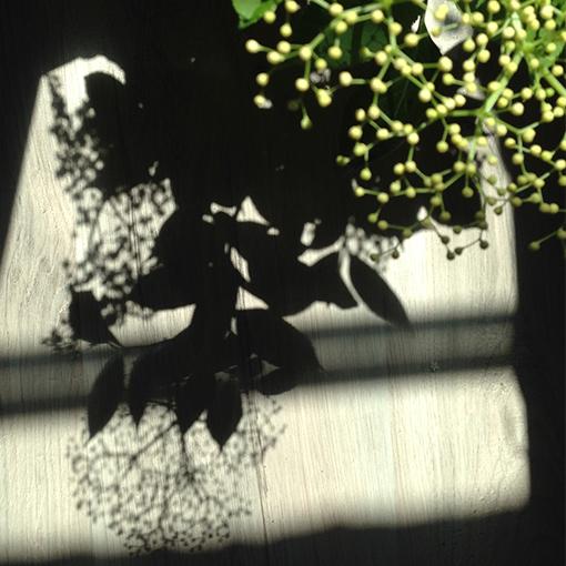 Fleur_3